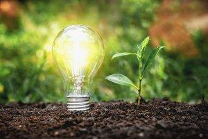 Energy_Saving_Lamps_And_Planti_jpg